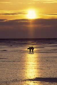 Conservationists hope the sun won't set on such a powerful and beautiful animal.