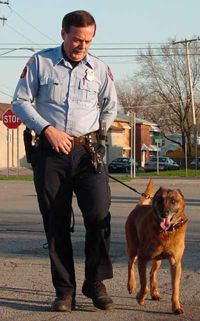 A police dog must be comfortable in public places and used to distractions like traffic.