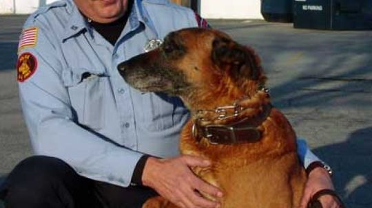 How Police Dogs Work