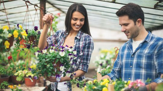 What's In Potting Soil? Everything But Soil