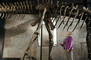 The Diplodocus longus could grow up to 92 feet in length but weighed only about 15 tons.