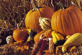 Don't just carve your pumpkins; eat them, too! See more pumpkin patch pictures.
