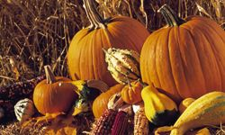 Don't just carve your pumpkins; use them in your skin-care routine, too!