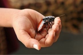 Unless you like to keep cockroaches as pets, it's best to prevent them from invading in the first place.