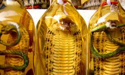 If you want to buy some snake liquor, try Ho Chi Minh City.