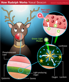 Rudolph could use his bioluminescent nose in order to locate a safe route for Santa's sleigh, but how would it work?