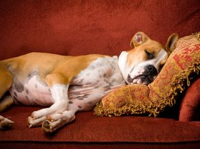 Your furry friend may be allowed on the furniture at your house, but it's important to know the rules at other homes. Check out these dog pictures.