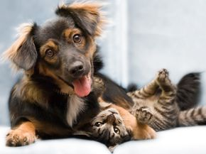 Things will go more smoothly if your pet is friendly to everyone.