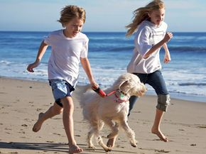 Keep your pet active when you travel.