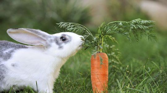 Do rabbits really love carrots?