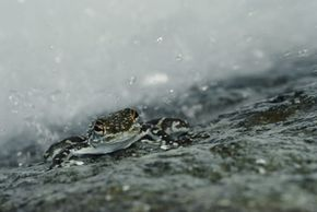 A sudden downpour of frogs is one of the most bizarre weather events. See more amphibian pictures.