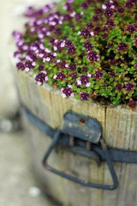 With some old cedar, a few supplies and a little elbow grease, you can create your own planter.