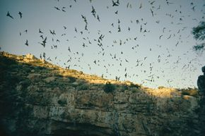 Imagine these Mexican free-tailed bats laden with incendiary bombs.