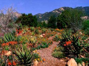 Desert region gardens can still have colorful displays.
