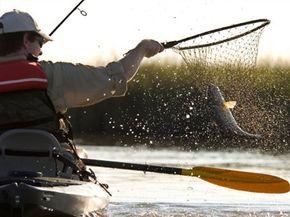 Man nets a Redfish, (Sciaenops ocellatus) from kayak in Bayou Thunder Von Tranc,, Louisiana, USA.