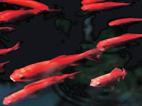 Photo of freshwater red fish. Contrast and color tone due to picture style chosen at RAW processing.