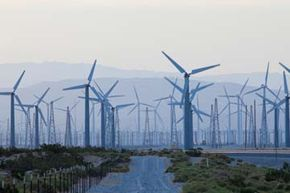 This field of wind turbines in California may look like a bird holocaust just waiting to happen, but the situation isn't quite that dire.
