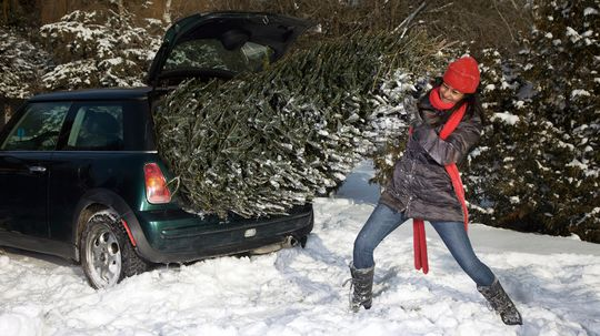 Don't Buy a Christmas Tree! Rent One Instead