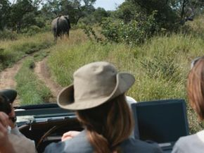 Riders in an off-road vehicle watch an elephant in front of them.