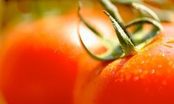 Tomatoes are delicious as well as good for you. See more heirloom tomato pictures.