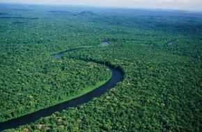 Pristine portions of the Amazon, like this one in French Guiana, offer shelter to myriad forms of life.