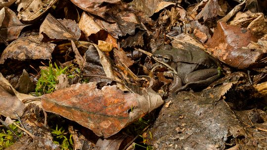 Weird Ways Reptiles and Amphibians Survive the Winter