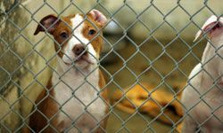 Volunteering at an animal shelter can provide a furry fix for those who can no longer commit to a pet of their own.