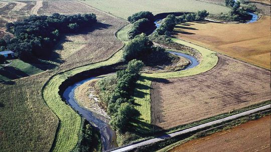 How Riparian Buffers Work to Save Your Local Waterways