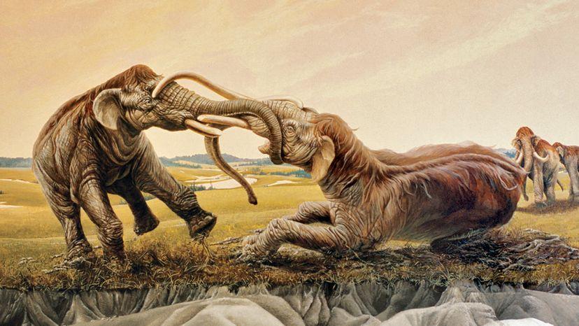 mammoth battle