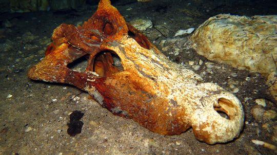 River-bottom Bones: The Strange World of Underwater Fossil Hunting