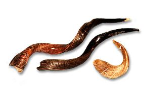 The shofar comes in many shapes and sizes.