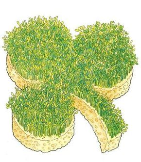 A lucky sprouting shamrock is one of the crafts you'll learn about in this article.