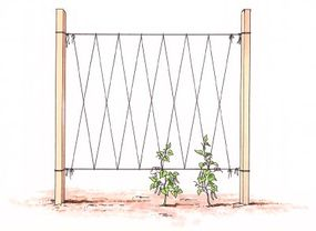 A trellis system must be well supported.