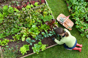 Whether or not you save money by growing your own food depends on a lot of factors.