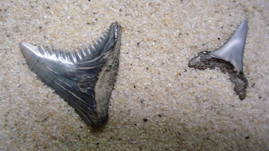 The Rockin' State Fossils Quiz