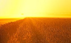 Soybeans are a leading cash crop in Nebraska.