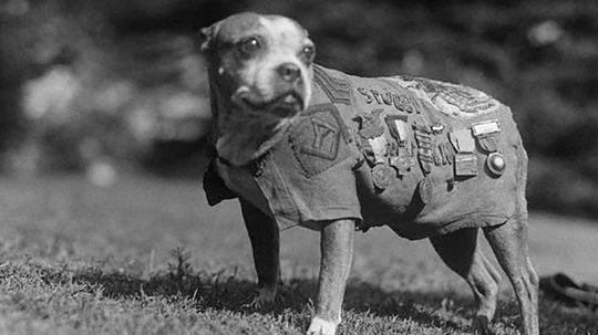 How War Dogs Work