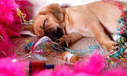 If the party is a success, then the guests will definitely need a nap when it's over.