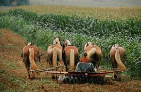 The Amish were green long before it was cool.