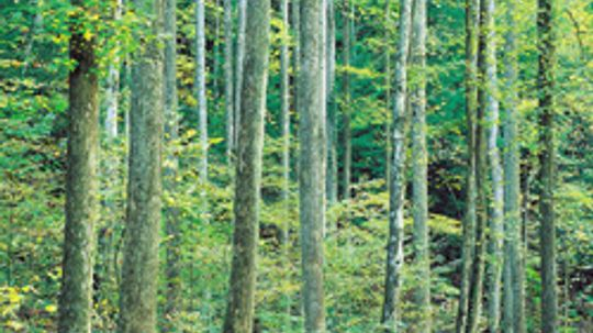 5 Sustainable Hardwoods