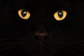 Superstitions about cats have existed for centuries. Why are we so superstitious about our feline friends?