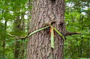 The worst thing is to get lost in the woods. In lieu of a trail marker, use some string from your bracelet.