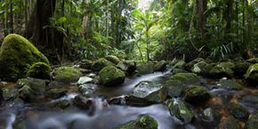 The jungle is a calm and peaceful setting. And it will kill you dead if you aren't careful.