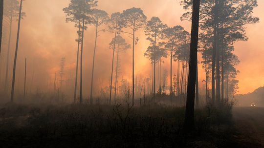 Swamps and Wildfires: A Dangerous Combination