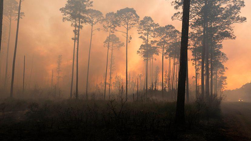 swamp fires