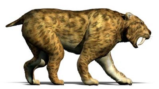 How Saber-tooth Cats Worked