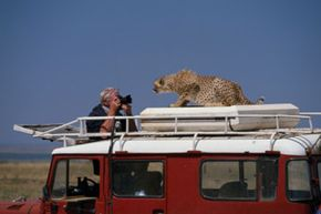 This man is a bit too close to a cheetah in Masai Mara National Reserve in Kenya.