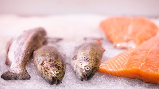 Scientists Discover Why Half of All Farmed Salmon Are Partially Deaf