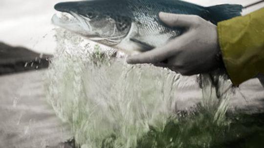Top 6 Salmon Fishing Techniques