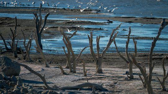 How the Salton Sea Became an Eco Wasteland
